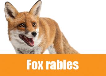 fox rabies
