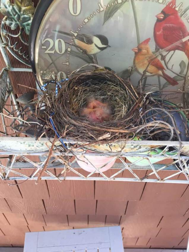 bird fetuses